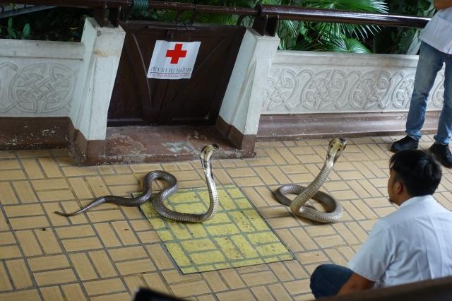 タイのスネークファーム