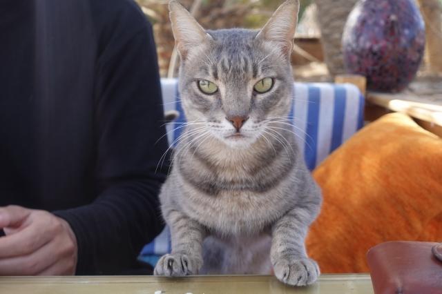 ダハブの猫